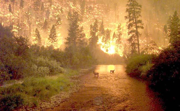 fires_mccolgan.jpg