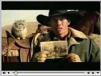 Cat_herding_1
